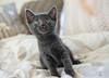 Seattle-kittens-2055
