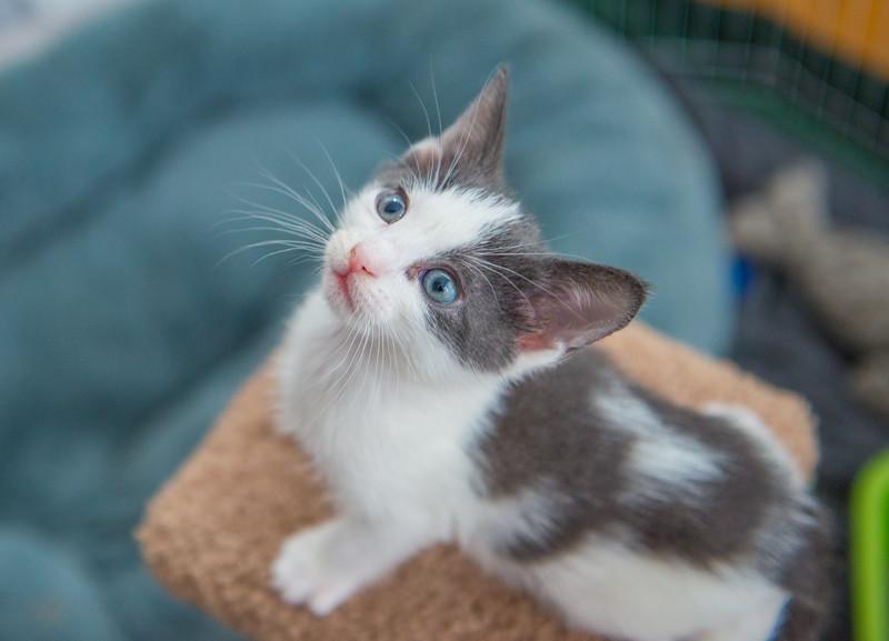Jeni-Foster-Cat-1027
