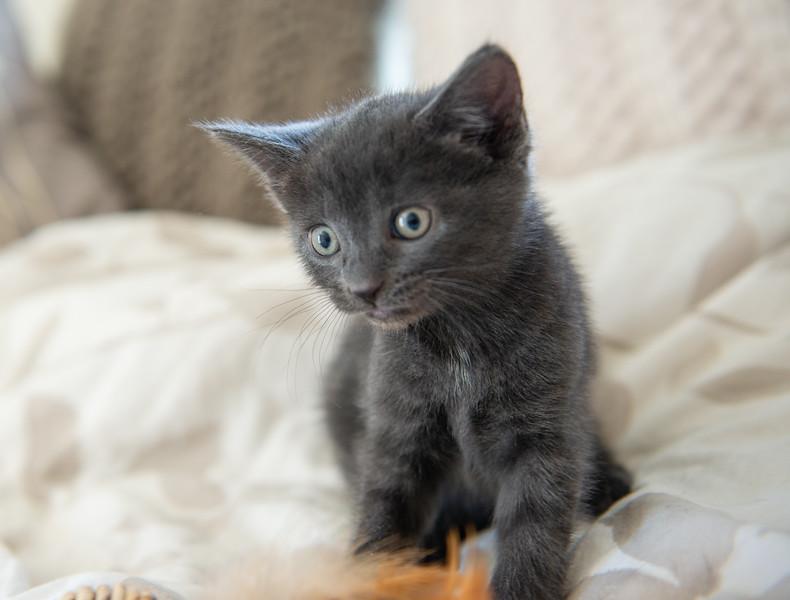 Seattle-kittens-2052