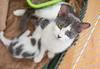 Jeni-Foster-Cat-1045