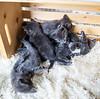 Seattle-kittens-2038
