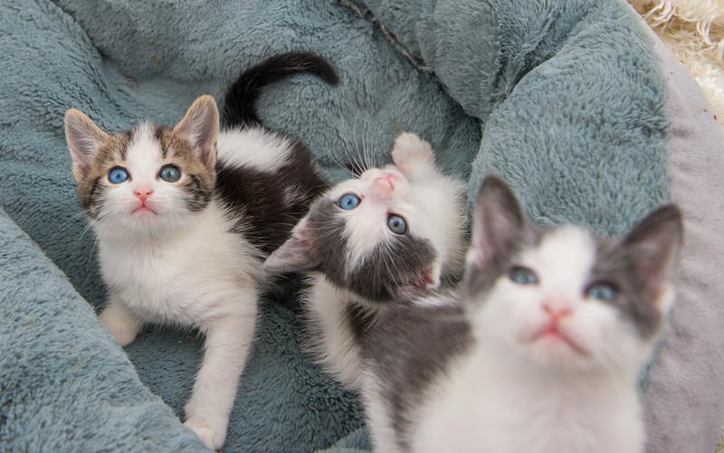 Jeni-Foster-Cat-1025