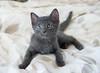 Seattle-kittens-2048