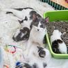 Jeni-Foster-Cat-1018