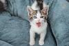 Jeni-Foster-Cat-1033