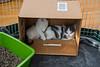 Jeni-Foster-Cat-1031
