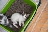 Jeni-Foster-Cat-1001