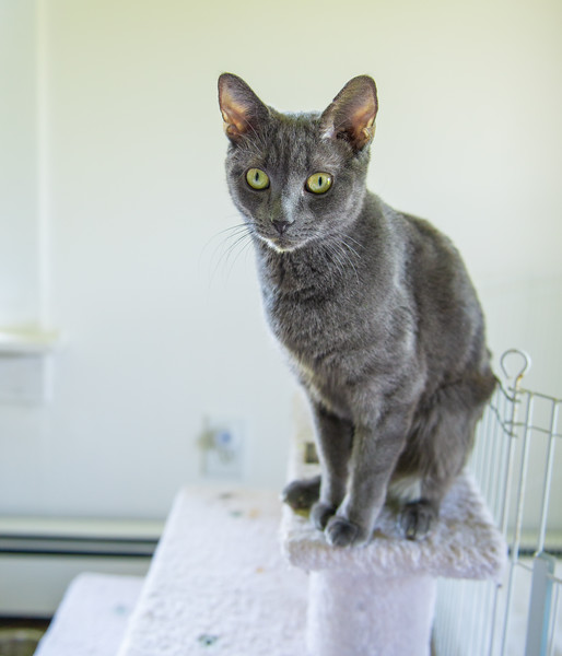 Seattle-kittens-2026