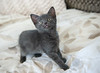 Seattle-kittens-2045