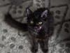 cats-3010