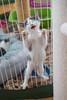 Jeni-Foster-Cat-1036