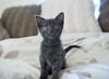 Seattle-kittens-2042