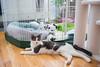 Jeni-Foster-Cat-1002