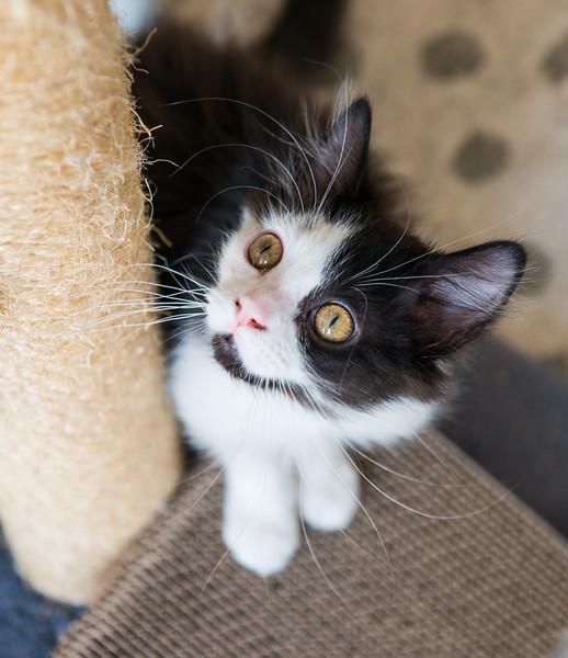 cats-2011