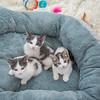 Jeni-Foster-Cat-1004