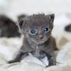 Seattle-kittens-2008