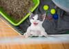 Jeni-Foster-Cat-1026