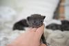 Seattle-kittens-2005