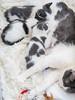 Jeni-Foster-Cat-1016