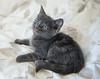 Seattle-kittens-2051