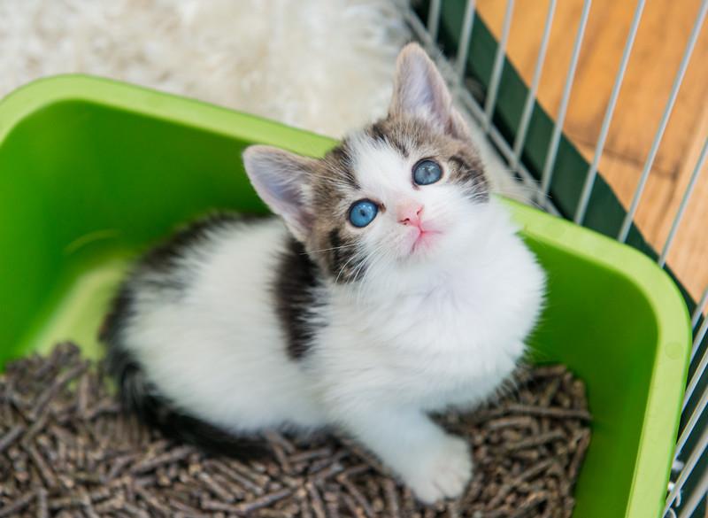 Jeni-Foster-Cat-1020