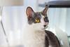 Jeni-Foster-Cat-1034