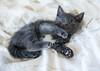 Seattle-kittens-2049