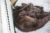 Seattle-kittens-2010