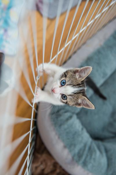Jeni-Foster-Cat-1039
