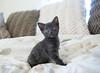 Seattle-kittens-2044