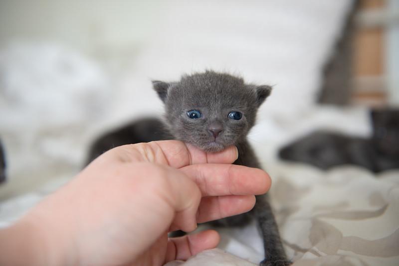 Seattle-kittens-2006