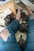 Seattle-kittens-2036