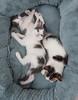 Jeni-Foster-Cat-1043