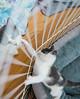 Jeni-Foster-Cat-1041