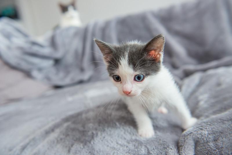 Jeni-Foster-Cat-1038