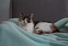 cats-3013
