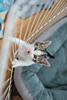 Jeni-Foster-Cat-1040
