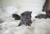 Seattle-kittens-2007