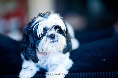 Becca Estrada Photography - Hirsch Family -   (7)