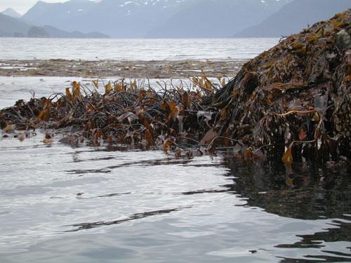 Port Dick, Gore Pt., Kenai Peninsula, AK; 2002