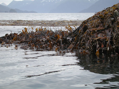Port Dick, Gore Pt., Kenai Peninsula, AK; 2002