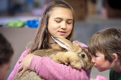 University of Alaska Cooperative Extension Tanana Valley State Fair Rabbit