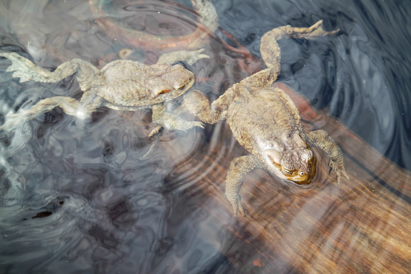 Toads in a boat