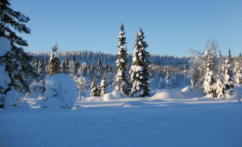 Winter landscape, Vilhelmina, Sweden