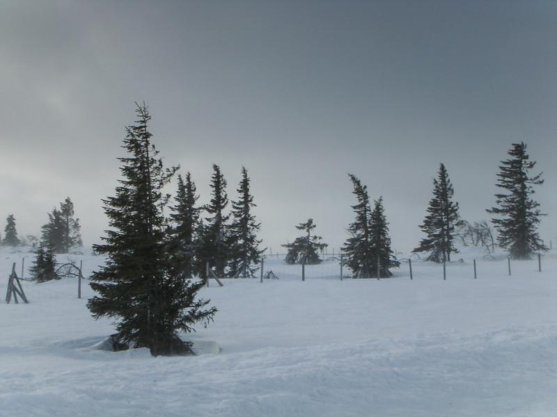 Snowstorm on mountain, Vilhelmina, Sweden