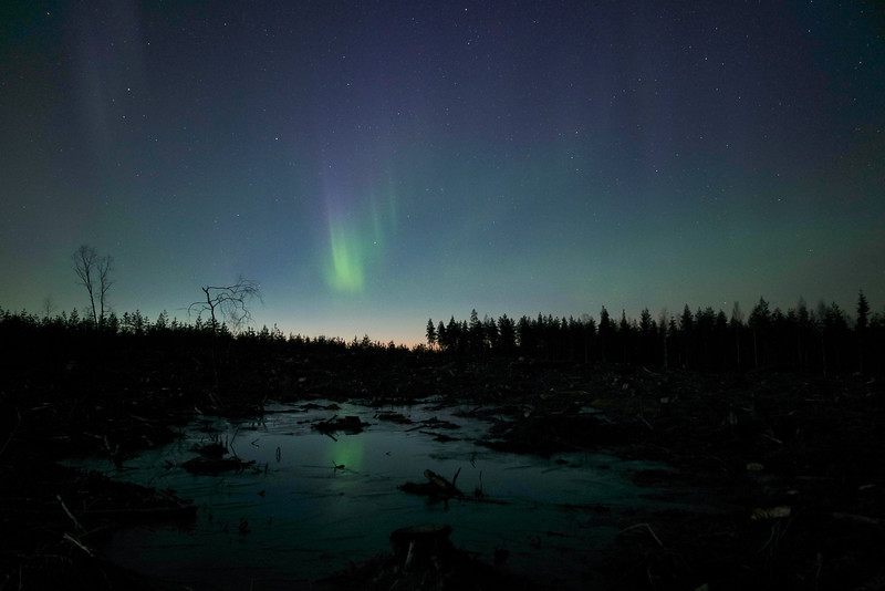 Northern lights, forest, Kälviä-Kelviå, Finland