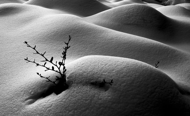 Fresh Snow Along the River Bed