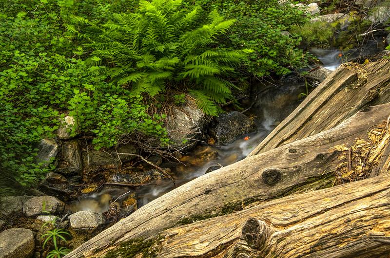 Alger Creek