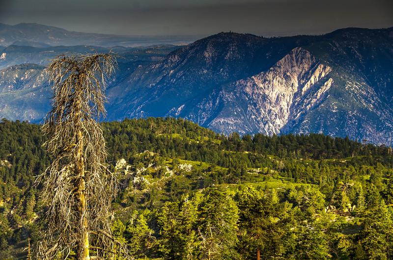 Manzanita & The Arrowhead near San Bernardino Peak