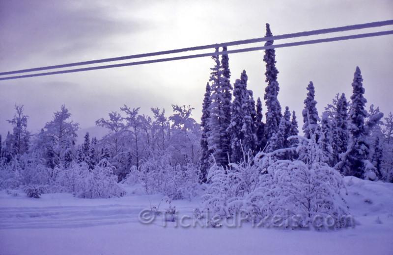 Frosty Morning, Just across Fortymile Bridge